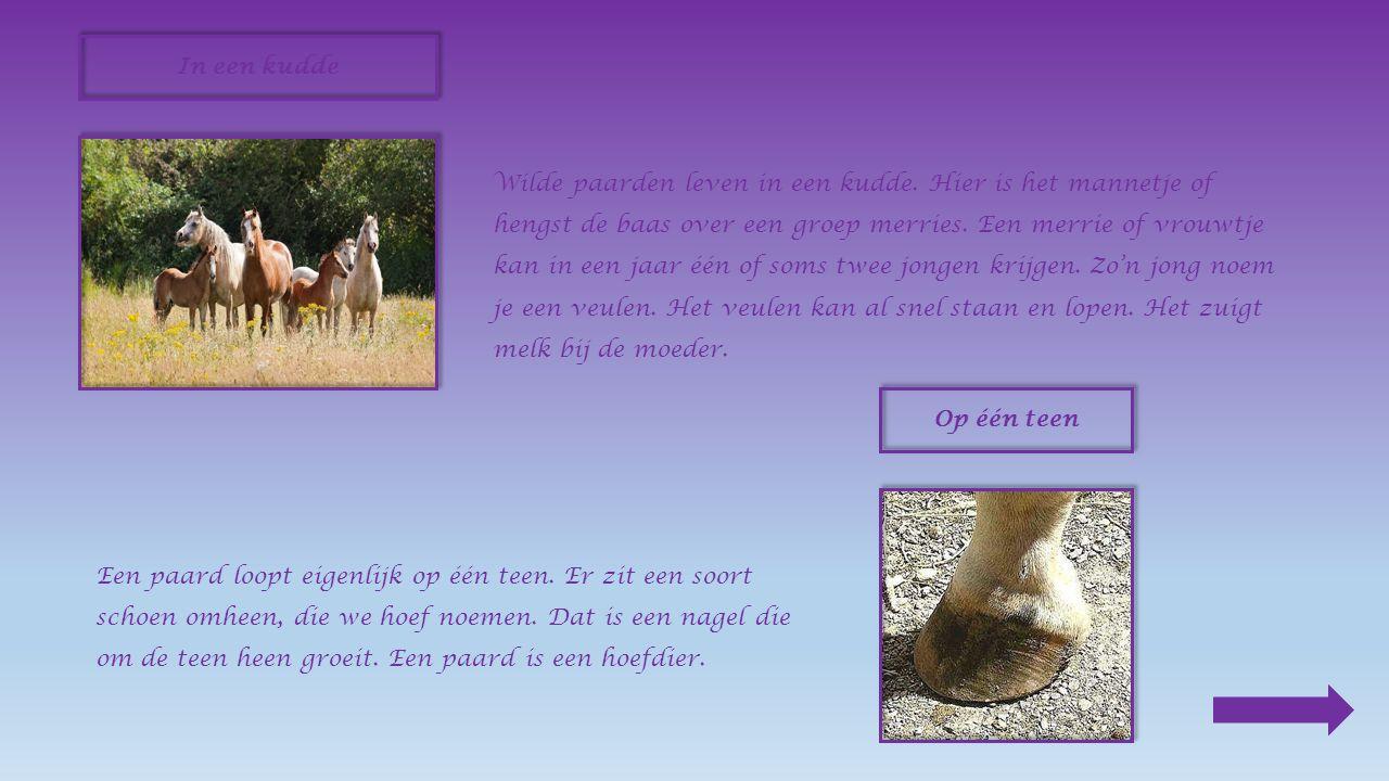 Al heel lang wordt het paard gebruikt als rijdier en trekdier.