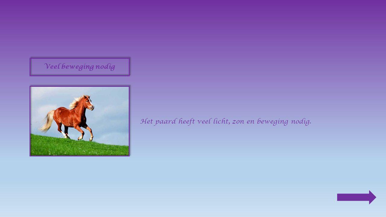 5.Vergelijk : rijpaard : __________ Klik op het juiste antwoord in snel sterktraaglichtzwaar