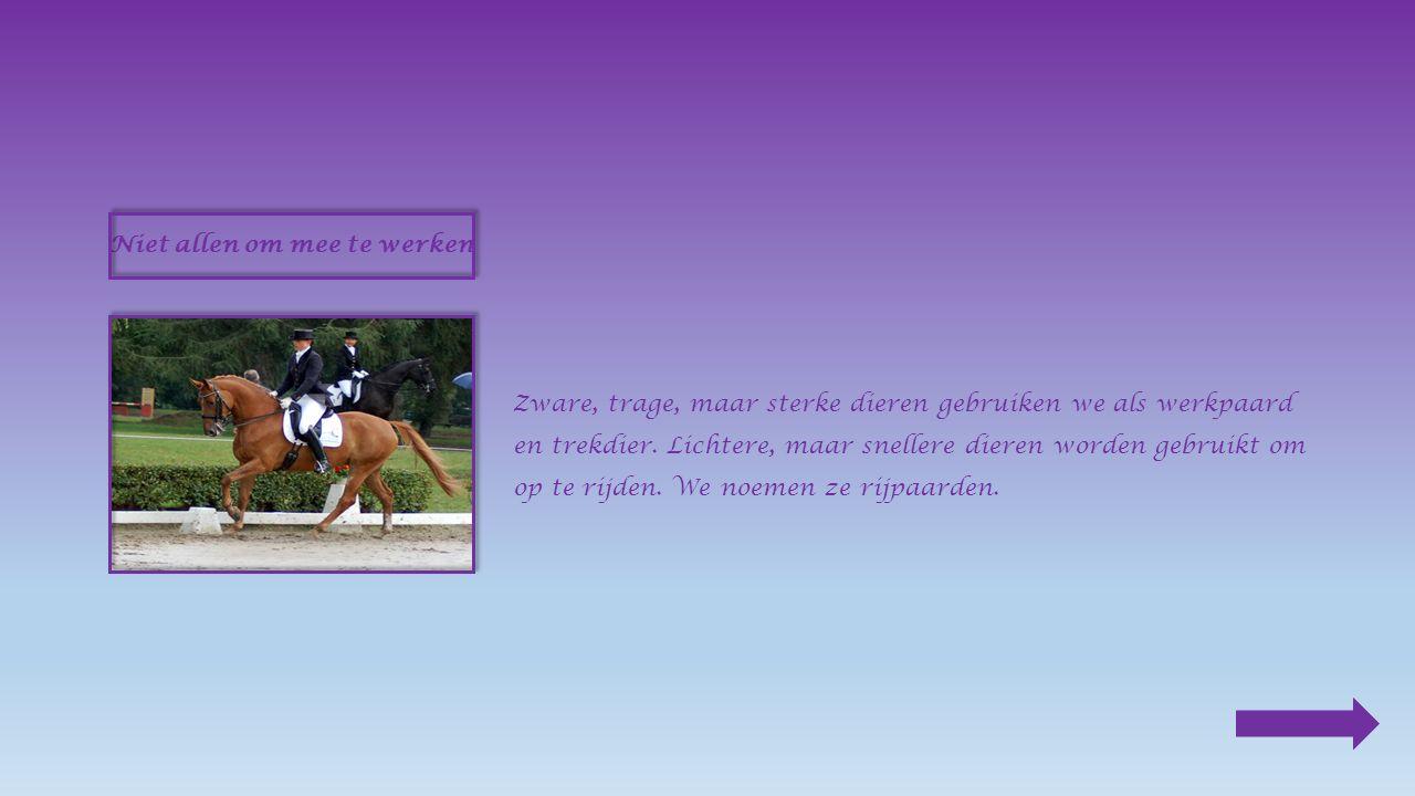 Niet allen om mee te werken Zware, trage, maar sterke dieren gebruiken we als werkpaard en trekdier.