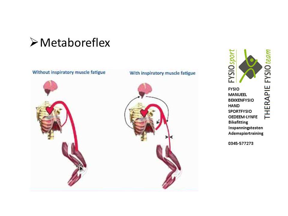  Metaboreflex