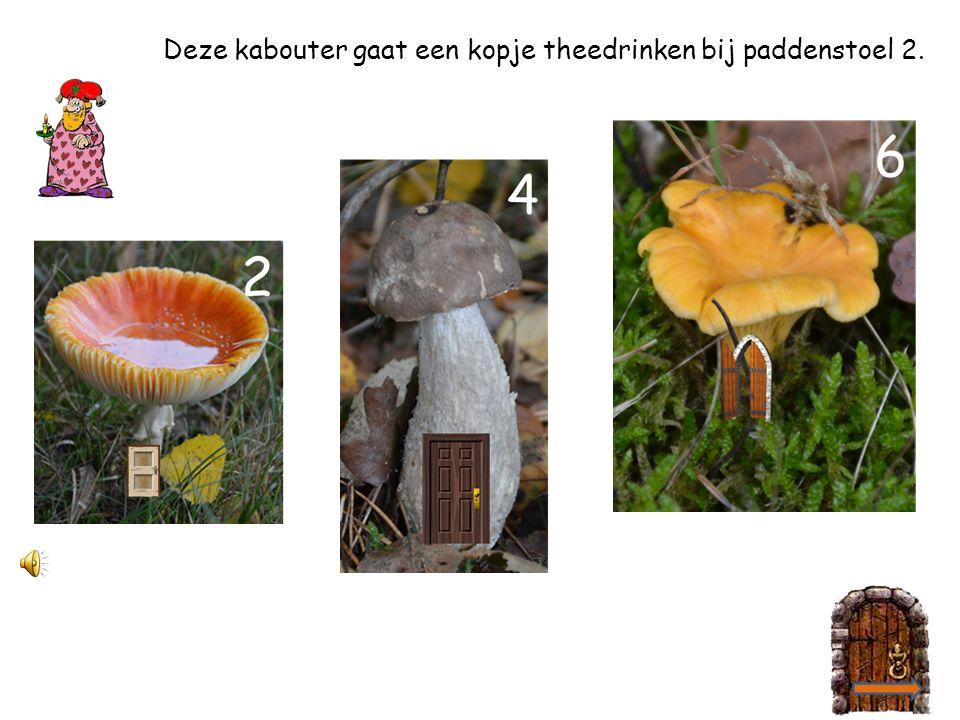 Help jij de kabouter paddenstoel 4 vinden?