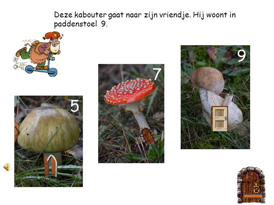 Er is een feest bij paddenstoel nummer 6.Daar wil deze kabouter graag naartoe.