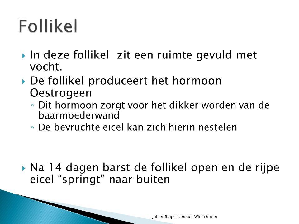  Luteiniserend hormoon  Start de eisprong(vrouw)  Zorgt voor productie en afgifte van testosteron(man) Johan Bugel campus Winschoten
