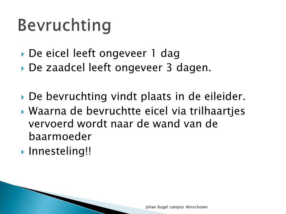  Remt de productie van FSH  Zorgt voor de groei van de baarmoederslijmwand  Stimuleert de vorming van de placenta Johan Bugel campus Winschoten