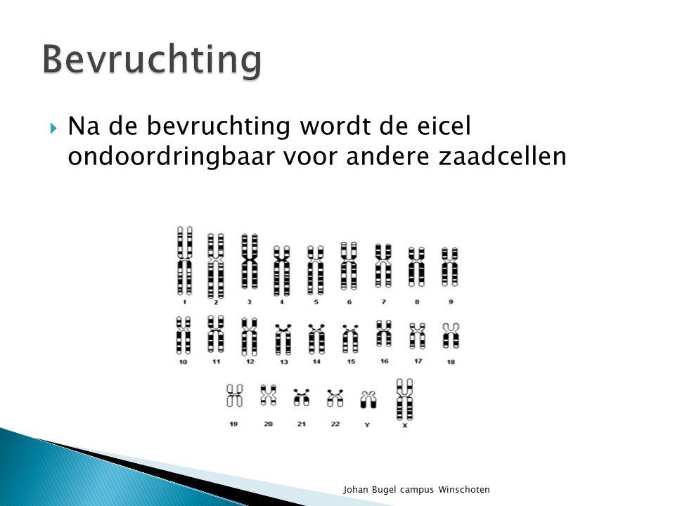  Zijn de dragers van de erfelijke eigenschappen  Deze bestaan uit DNA  Ieder mens is uniek ◦ Mens46 ◦ Aap 48 ◦ Rat42 ◦ Hond78 Johan Bugel campus Winschoten