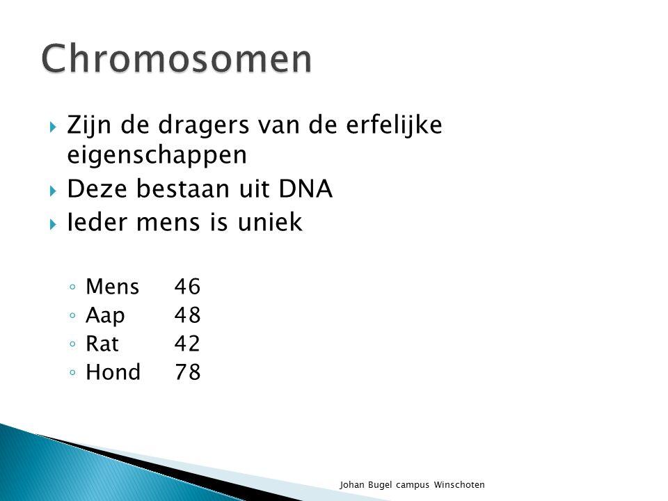  De eerste 5 dagen is de bevruchte eicel onderweg van de eileider naar de baarmoederwand  0,1 - 0,2 mm  Na de 9 e dag groeien de bloedvaten van de moeder naar het embryo  0,15 mm Johan Bugel campus Winschoten