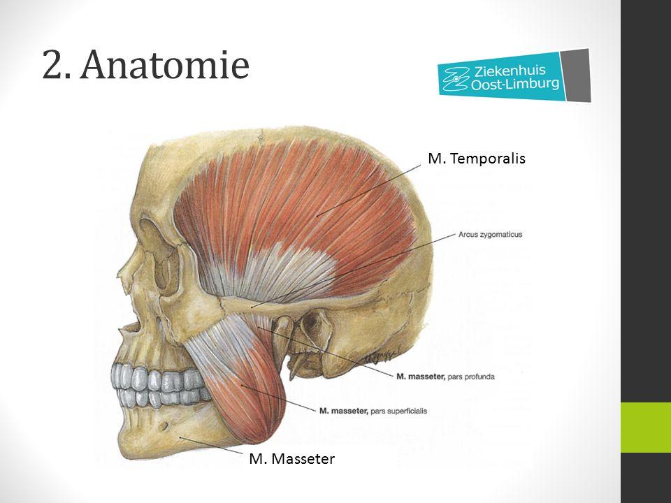 2. Anatomie M. Temporalis M. Masseter