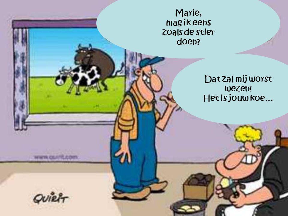 Marie, mag ik eens zoals de stier doen? Dat zal mij worst wezen! Het is jouw koe…