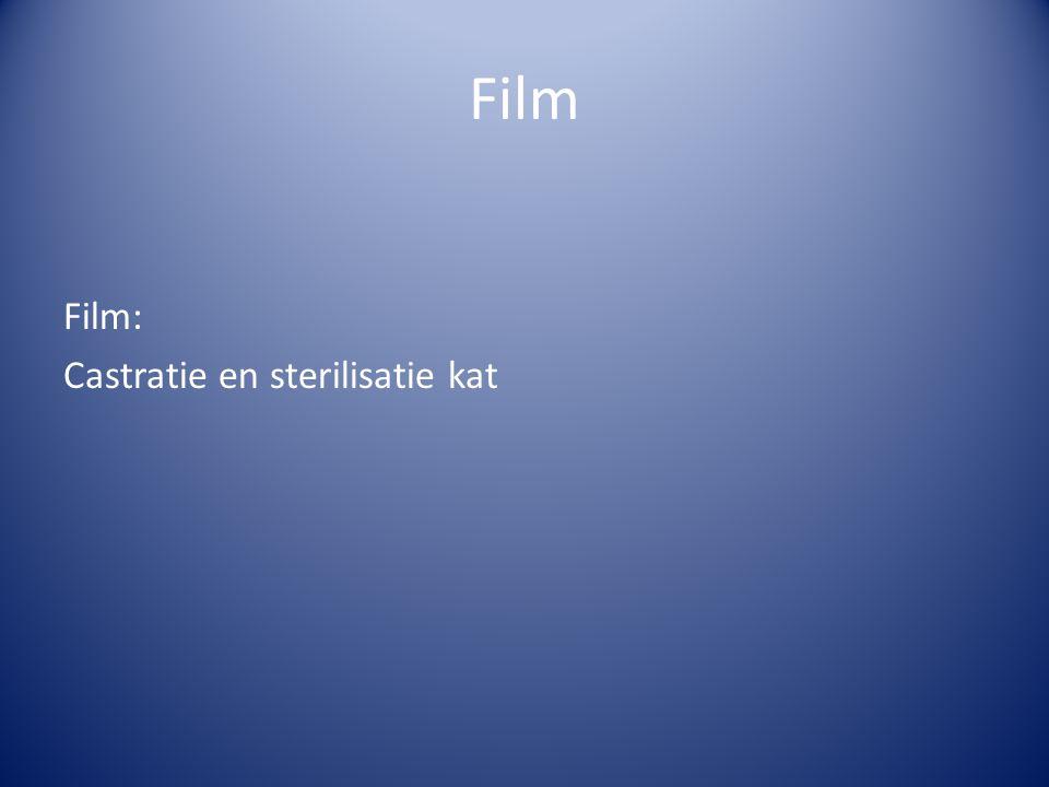 Film Film: Castratie en sterilisatie kat