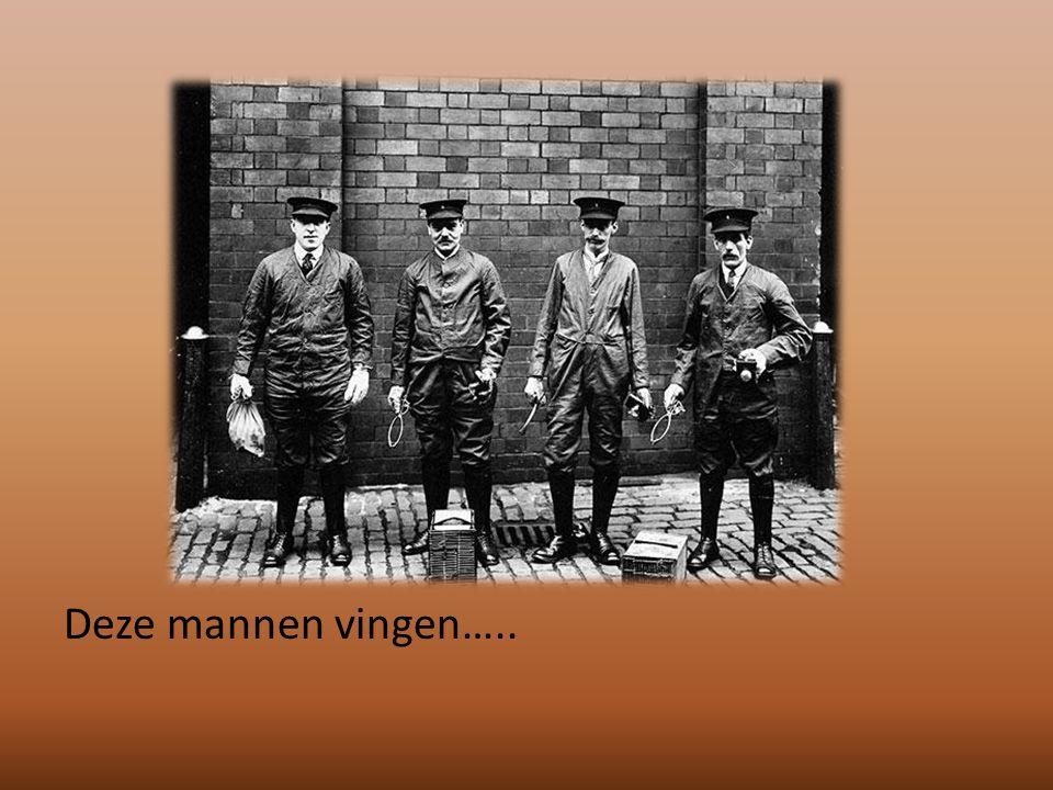 Deze mannen vingen…..