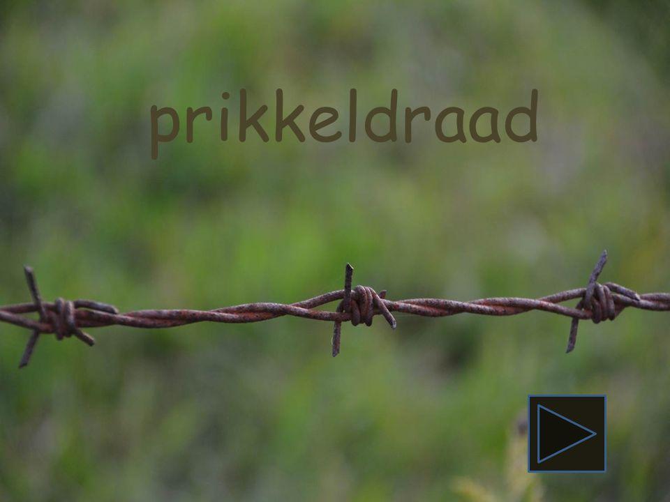 pieten gans roos deur aap Piraat begint met de letter P. Zie jij nog een woord dat met de letter P begint? pieten