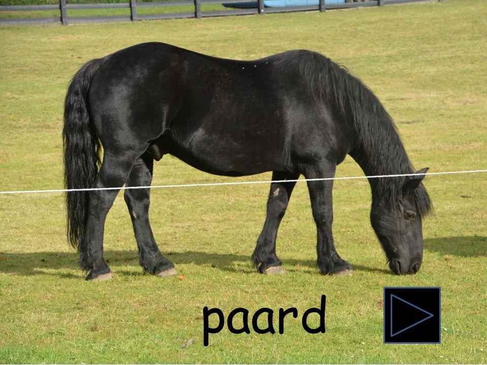 Piraat begint met de letter P. Zie jij nog een woord dat met de letter P begint? prikkeldraad reus bos buik oog prikkeldraad