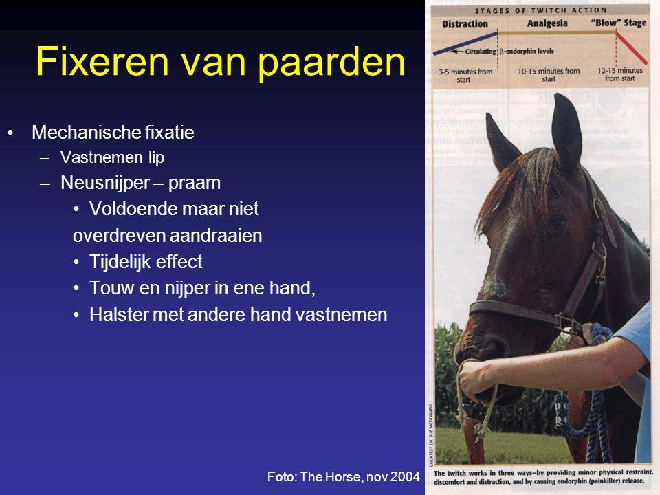 Fixeren van paarden Mechanische fixatie –Vastnemen lip –Neusnijper – praam Voldoende maar niet overdreven aandraaien Tijdelijk effect Touw en nijper in ene hand, Halster met andere hand vastnemen Foto: The Horse, nov 2004