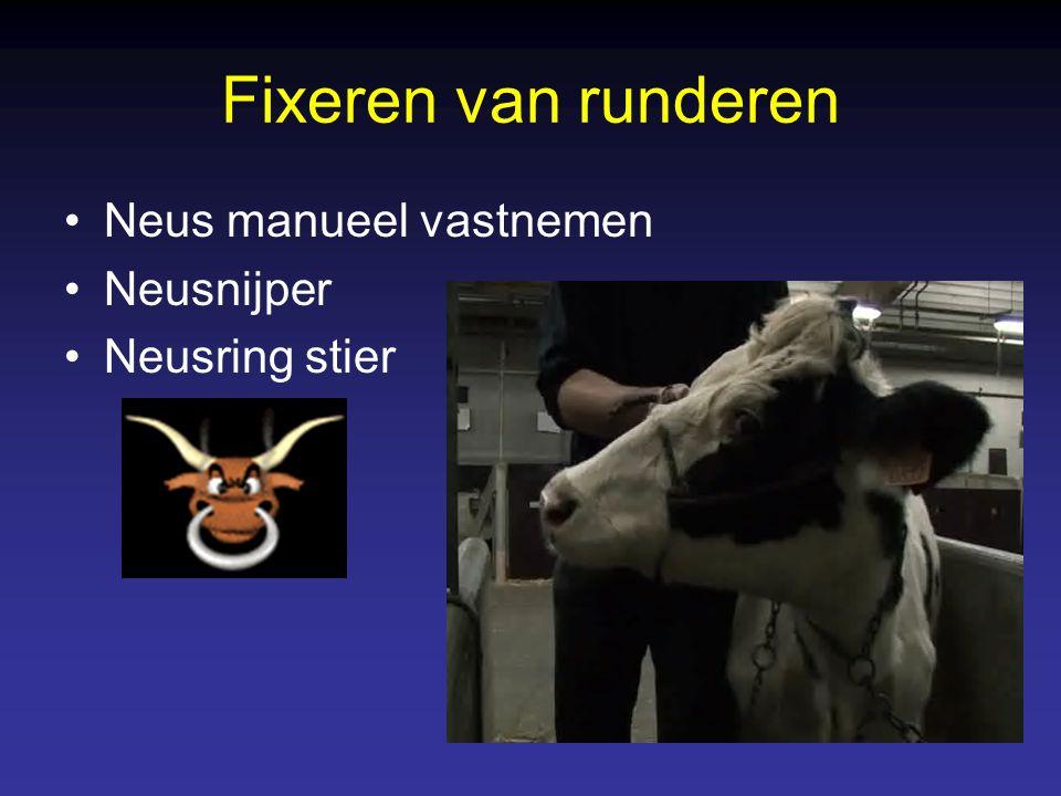Fixeren van runderen Neus manueel vastnemen Neusnijper Neusring stier