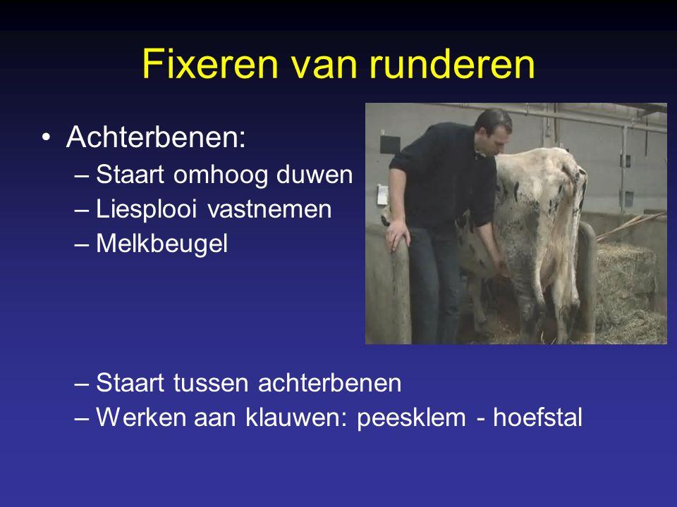 Fixeren van runderen Achterbenen: –Staart omhoog duwen –Liesplooi vastnemen –Melkbeugel –Staart tussen achterbenen –Werken aan klauwen: peesklem - hoefstal