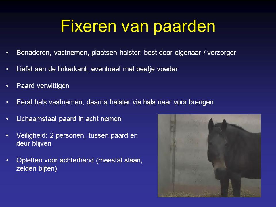 Fixeren van paarden Benaderen, vastnemen, plaatsen halster: best door eigenaar / verzorger Liefst aan de linkerkant, eventueel met beetje voeder Paard