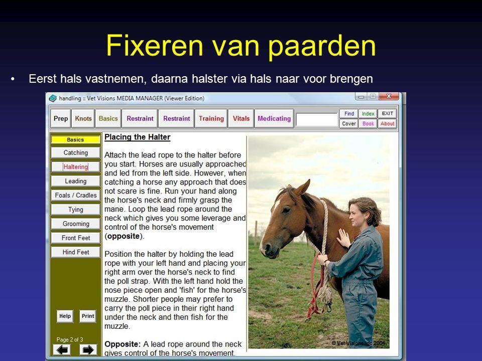 Fixeren van paarden Eerst hals vastnemen, daarna halster via hals naar voor brengen