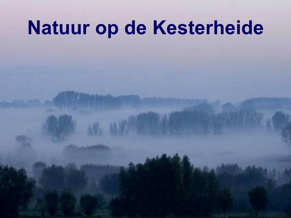 Natuur op de Kesterheide