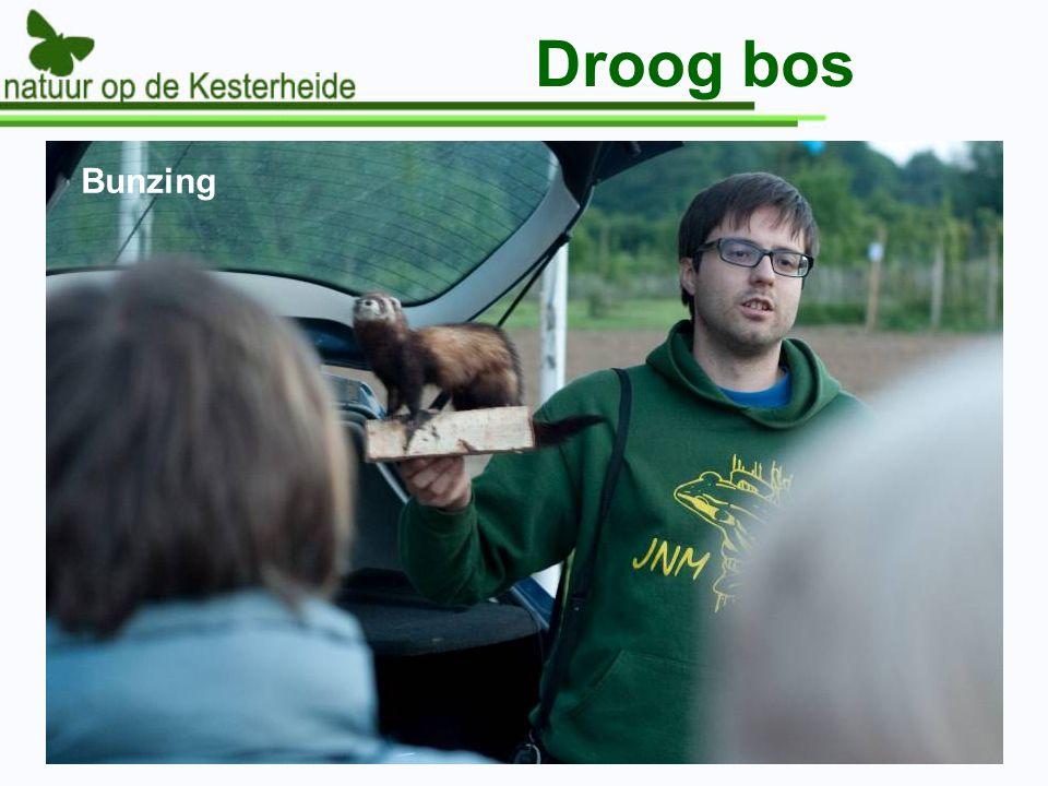 Droog bos Bunzing