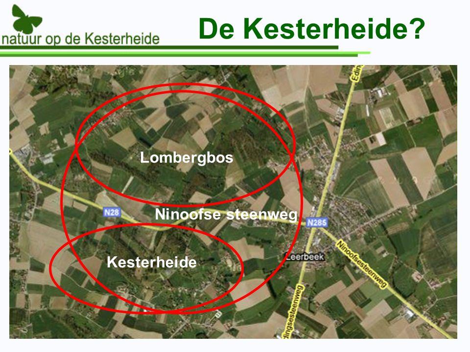 De Kesterheide Ninoofse steenweg Lombergbos Kesterheide