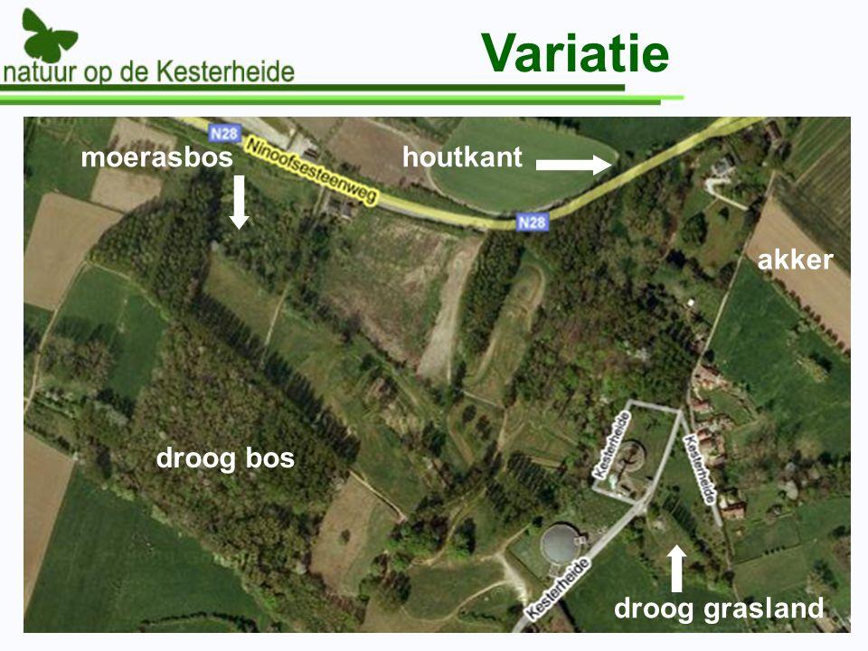 Variatie moerasbos droog grasland droog bos akker houtkant