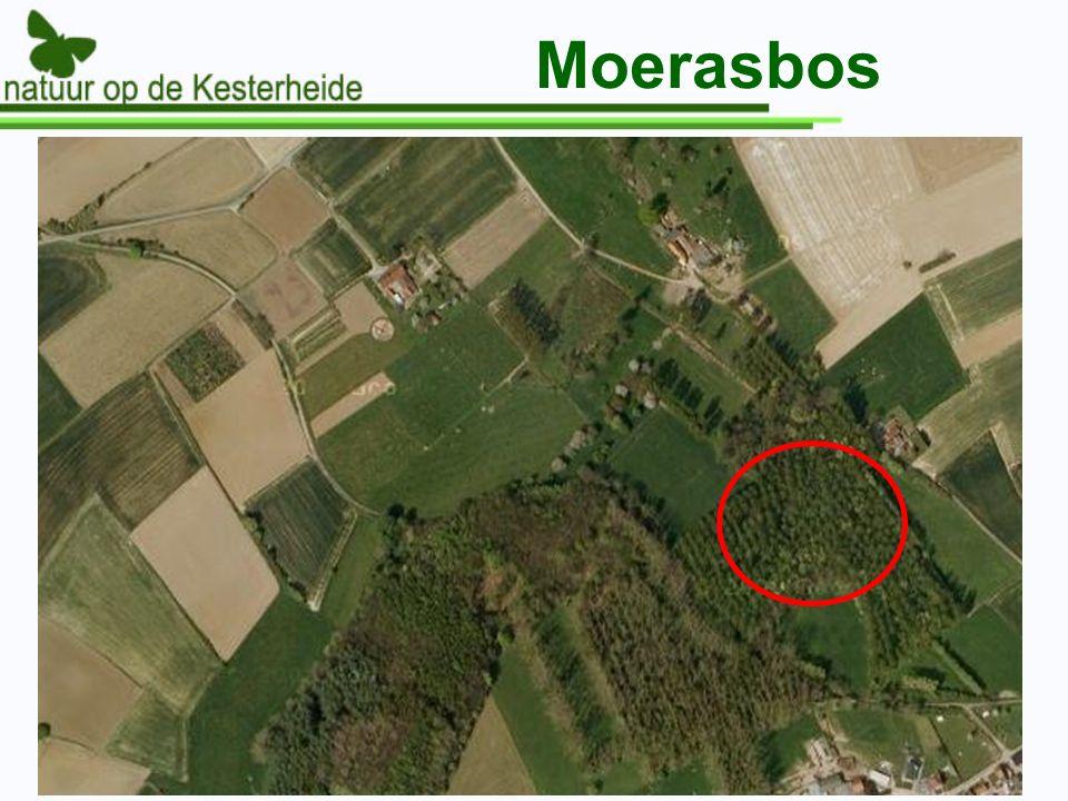 Moerasbos