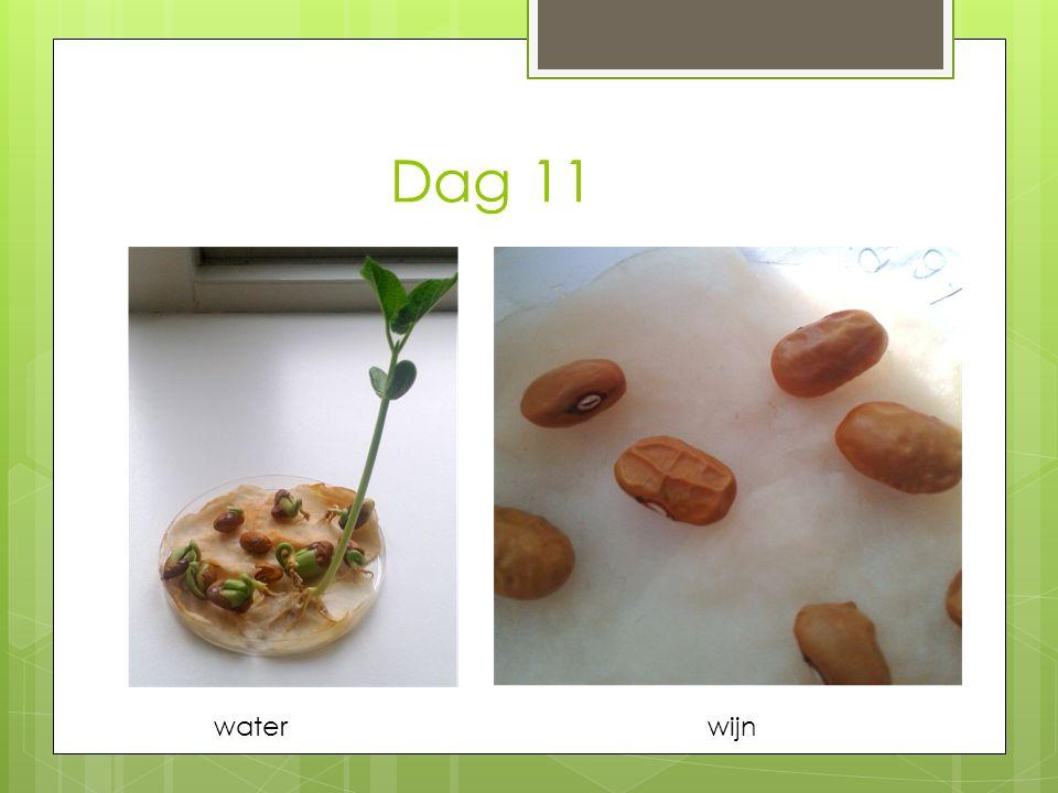 Dag 11 waterwijn