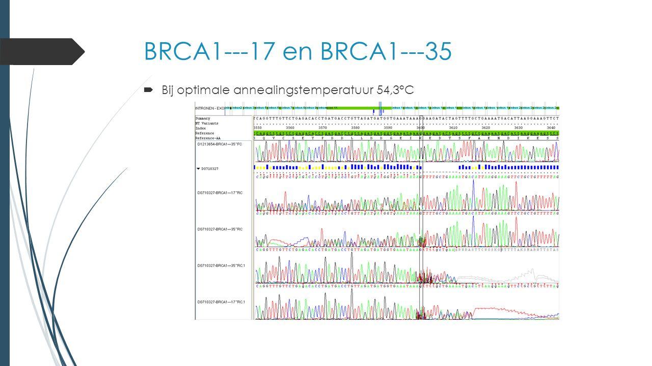 BRCA1---17 en BRCA1---35  Bij optimale annealingstemperatuur 54,3°C