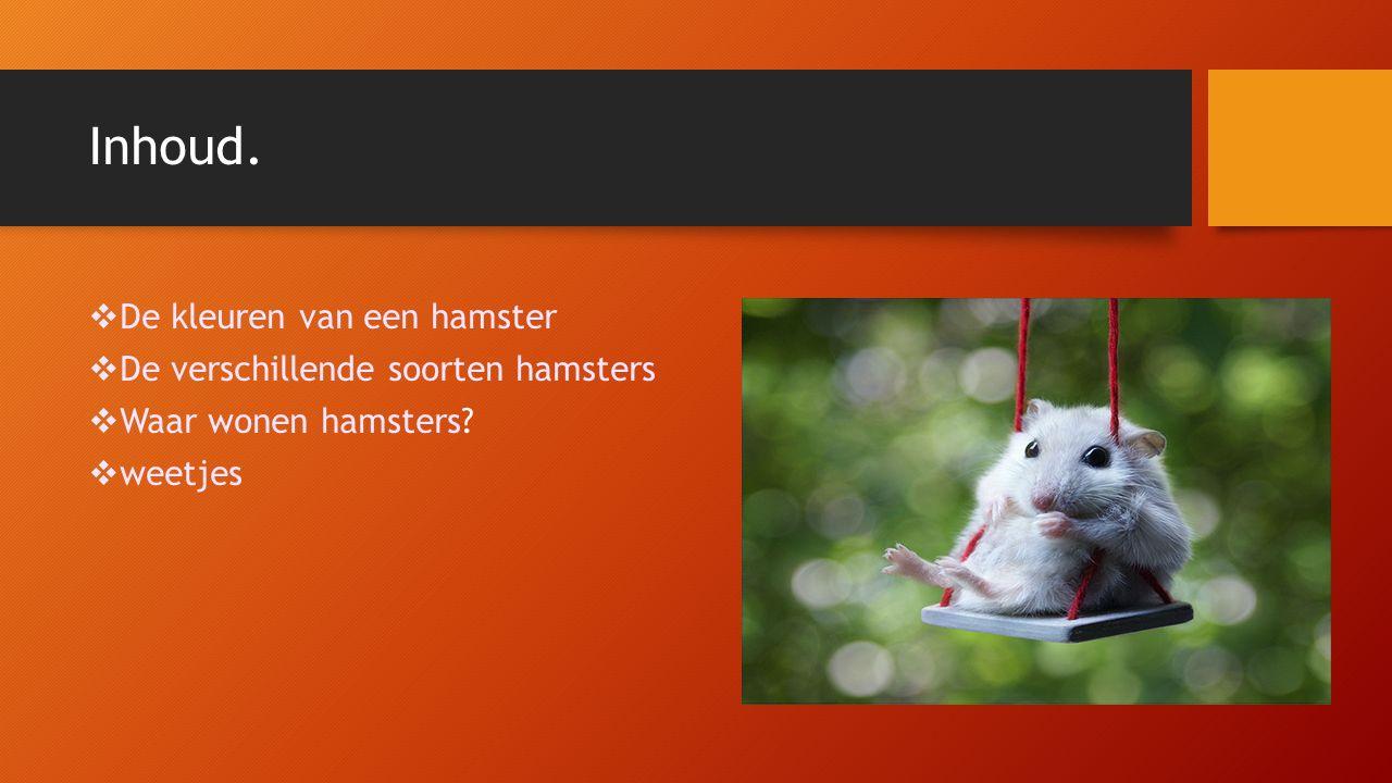 Inhoud.  De kleuren van een hamster  De verschillende soorten hamsters  Waar wonen hamsters?  weetjes