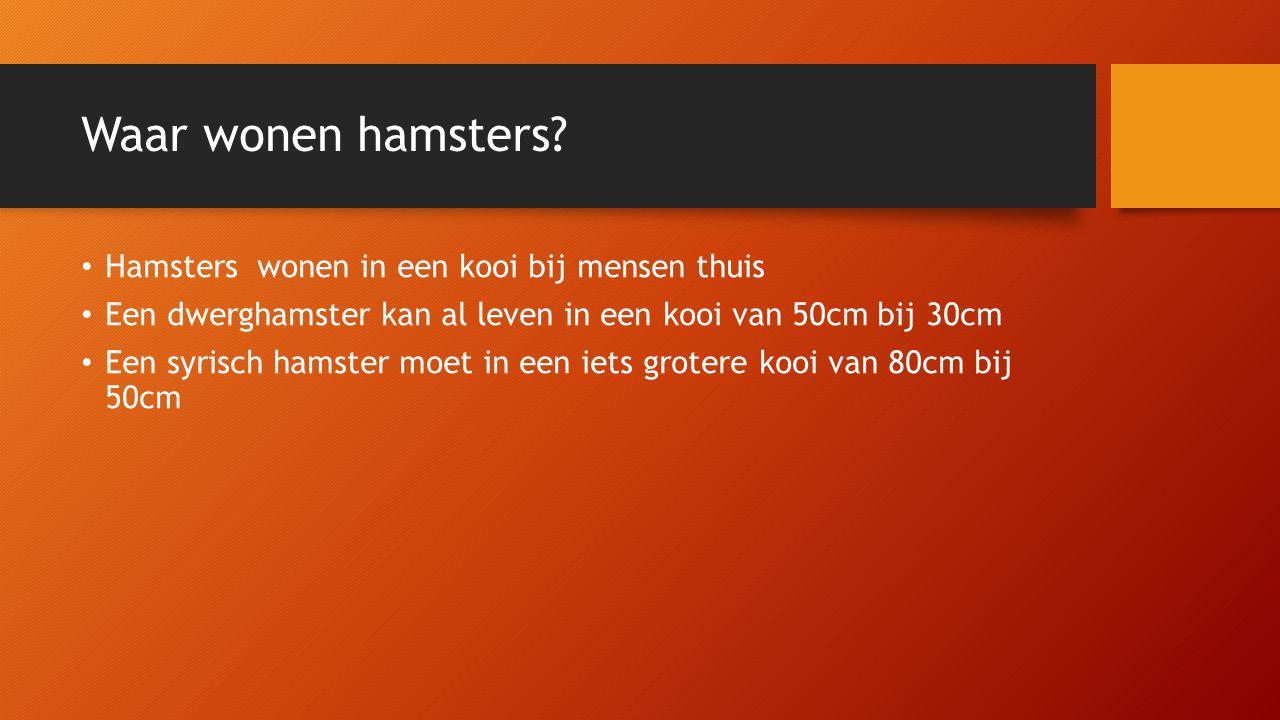 Waar wonen hamsters? Hamsters wonen in een kooi bij mensen thuis Een dwerghamster kan al leven in een kooi van 50cm bij 30cm Een syrisch hamster moet