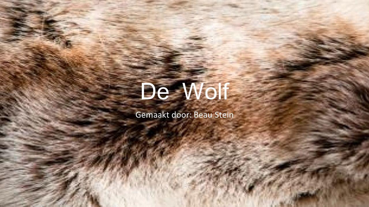 De Wolf Gemaakt door: Beau Stein