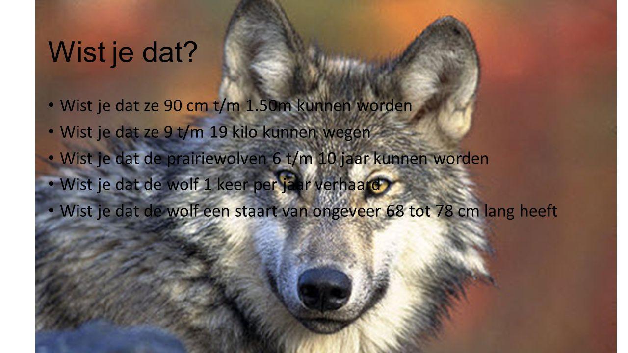 roedel Een vis leeft in een schol En een schaap in de kudde Maar een wolf leeft in een roedel Hij leeft dan met zijn familie