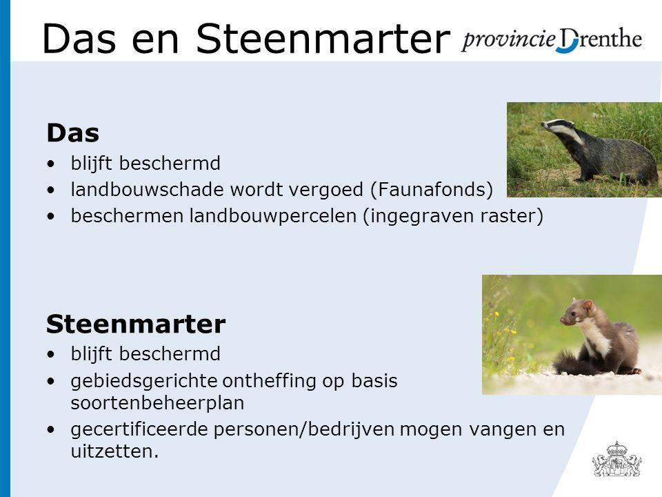 Das en Steenmarter Das blijft beschermd landbouwschade wordt vergoed (Faunafonds) beschermen landbouwpercelen (ingegraven raster) Steenmarter blijft b
