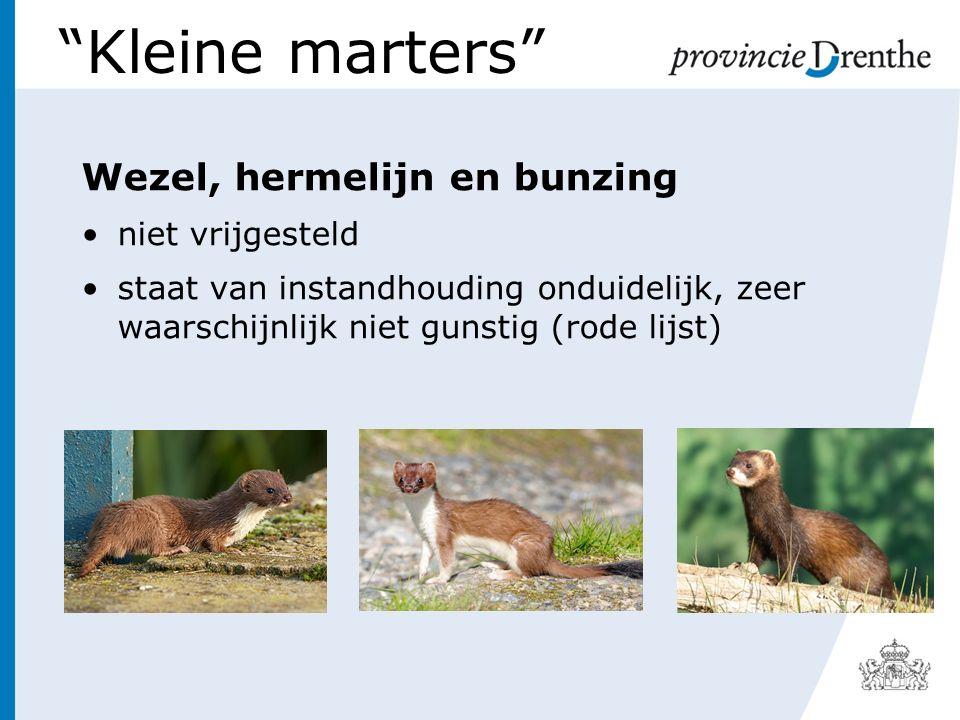 Kleine marters Wezel, hermelijn en bunzing niet vrijgesteld staat van instandhouding onduidelijk, zeer waarschijnlijk niet gunstig (rode lijst)