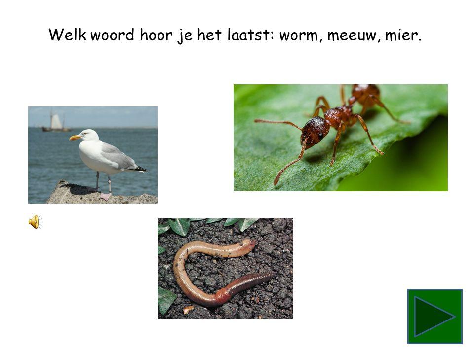 Welk woord hoor je het laatst: meeuw, mier, worm.