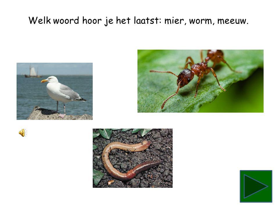 Welk woord hoor je het laatst: worm, meeuw, mier.
