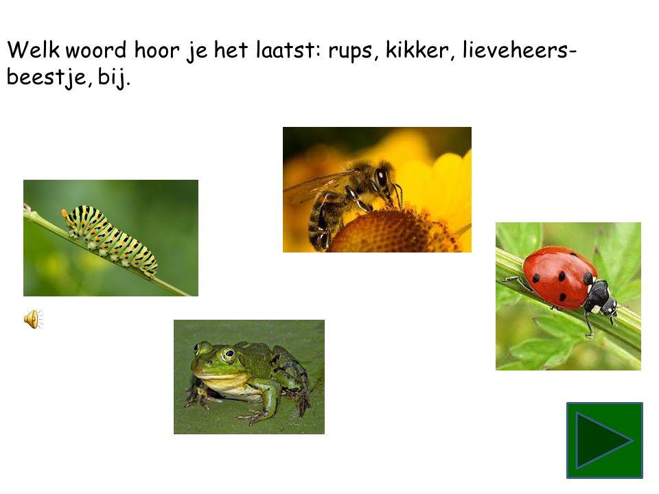 Welk woord hoor je het laatst: bij, rups, lieveheersbeestje, kikker.