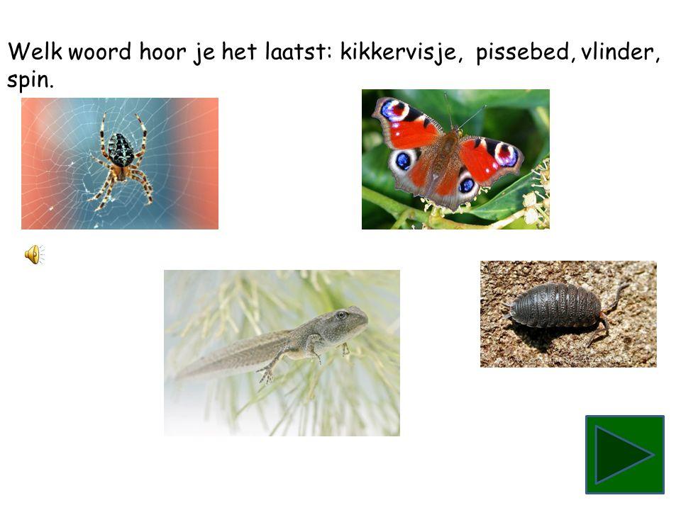 Welk woord hoor je het laatst: spin, pissebed, kikkervisje, vlinder.
