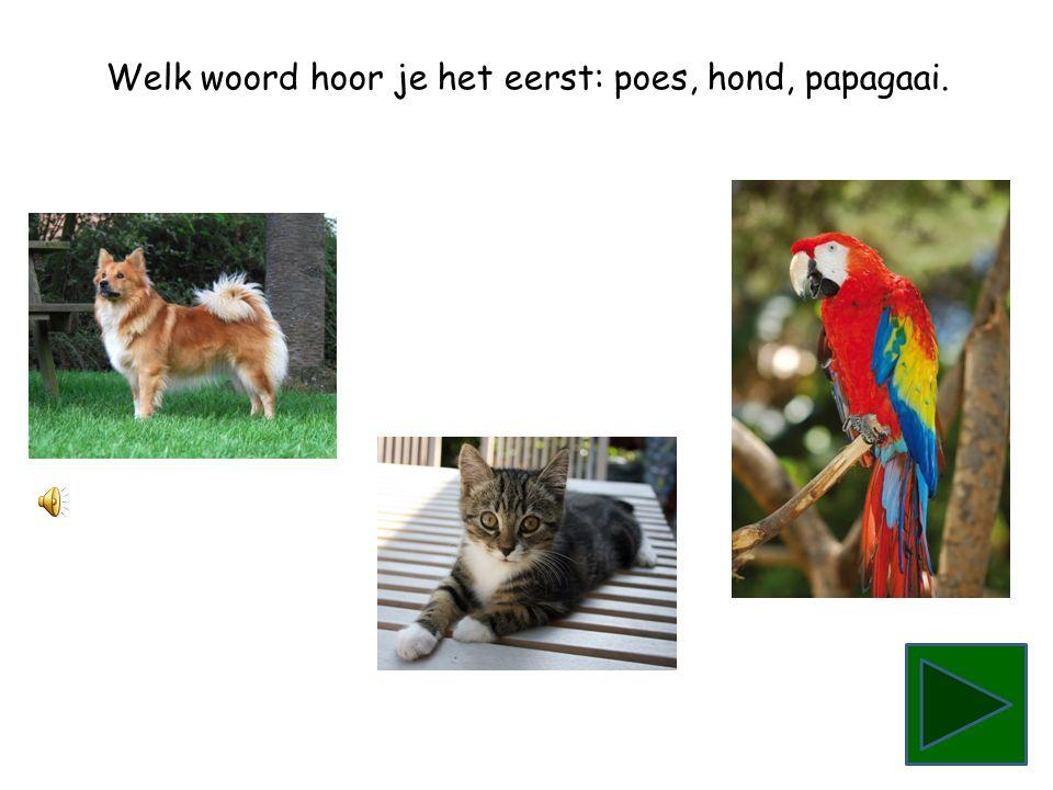 Welk woord hoor je het eerst: papagaai, poes, hond.
