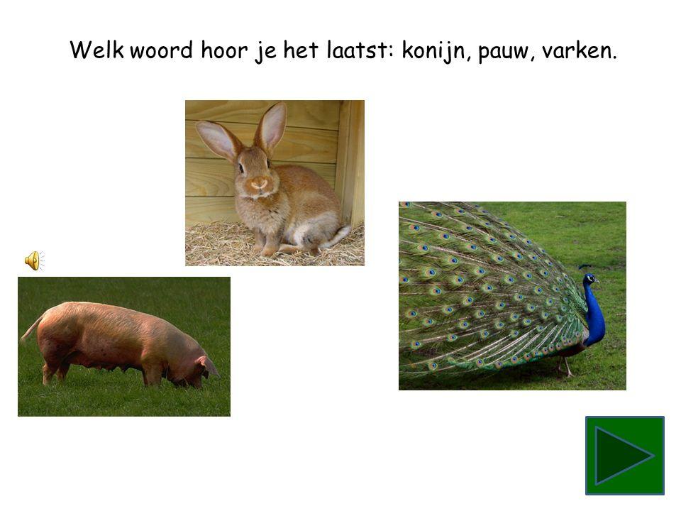 Welk woord hoor je het laatst: varken, konijn, pauw.
