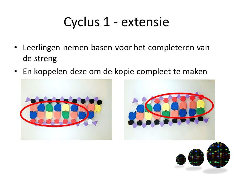 Cyclus 1 - extensie Leerlingen nemen basen voor het completeren van de streng En koppelen deze om de kopie compleet te maken