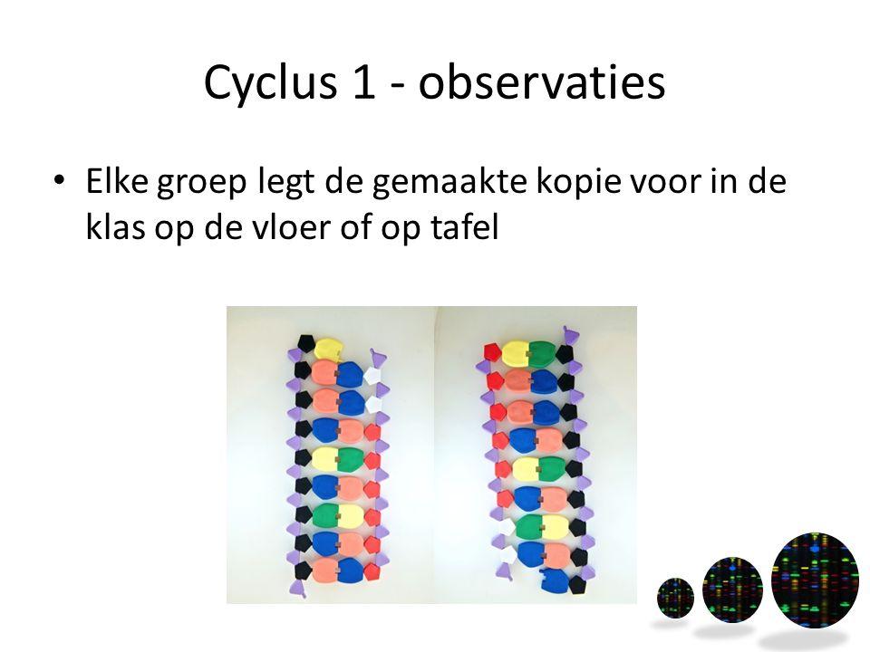 Cyclus 1 - observaties Elke groep legt de gemaakte kopie voor in de klas op de vloer of op tafel