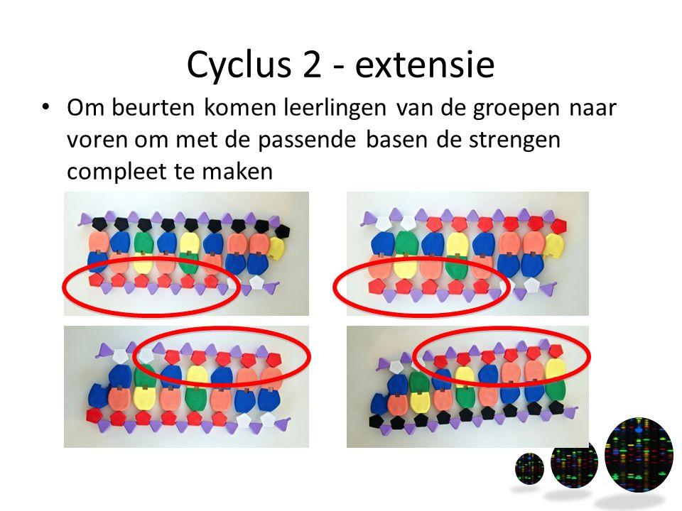Cyclus 2 - extensie Om beurten komen leerlingen van de groepen naar voren om met de passende basen de strengen compleet te maken