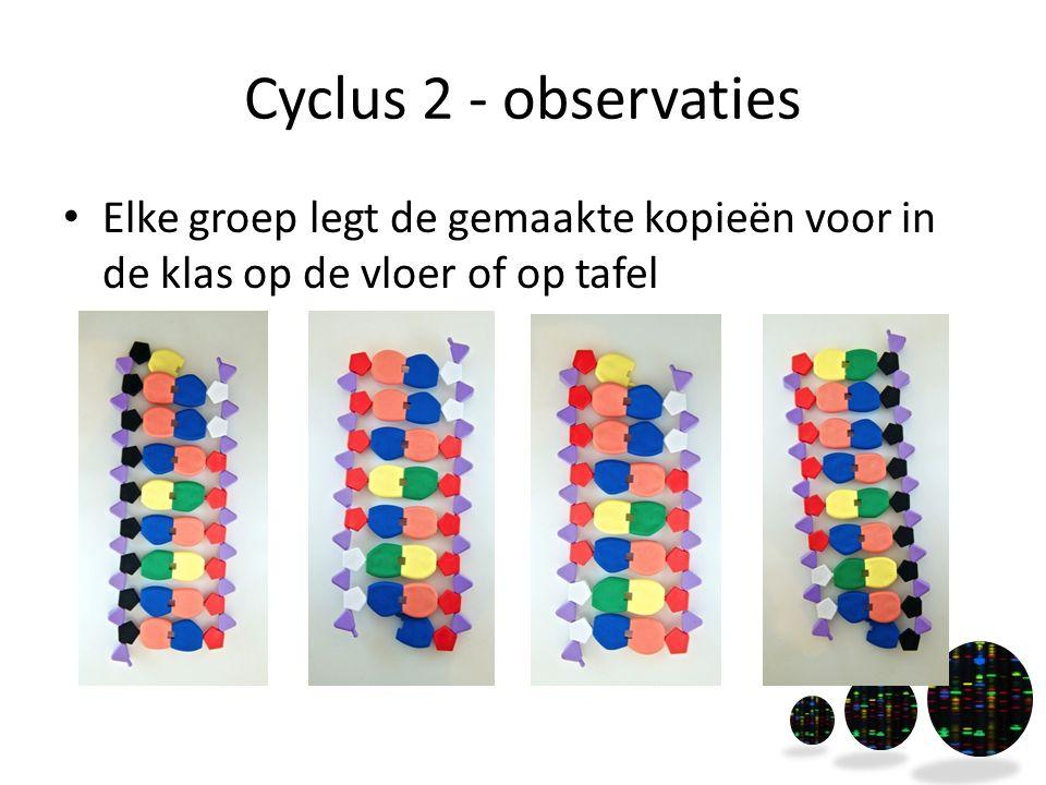 Cyclus 2 - observaties Elke groep legt de gemaakte kopieën voor in de klas op de vloer of op tafel