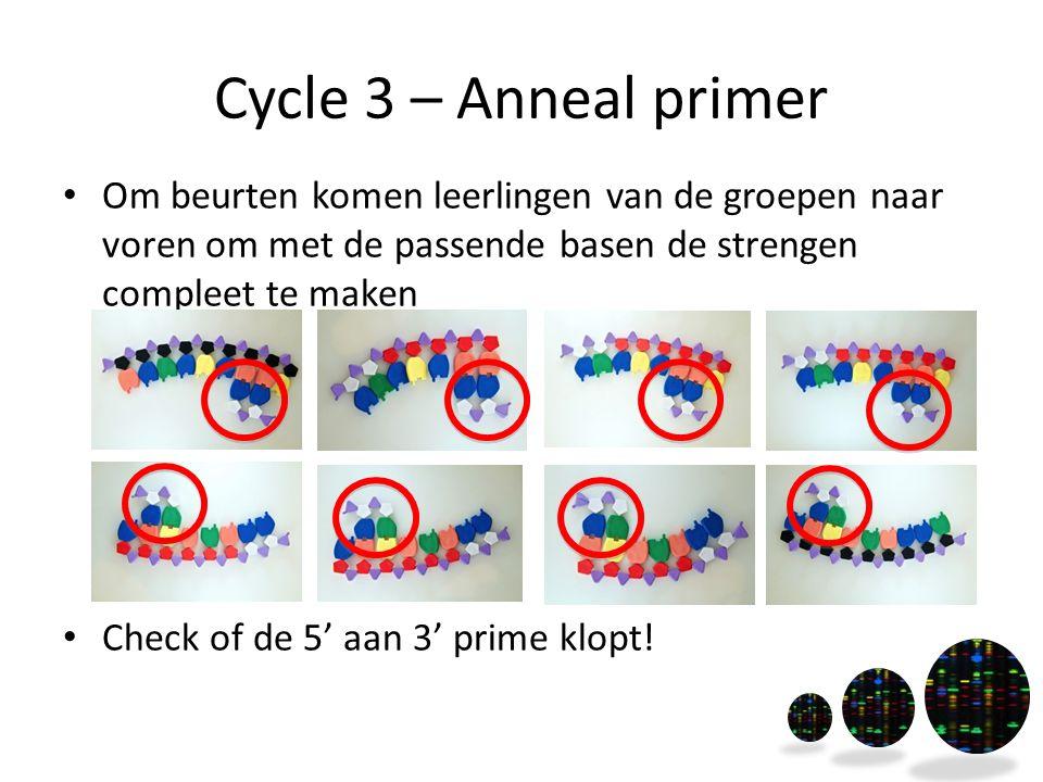 Cycle 3 – Anneal primer Om beurten komen leerlingen van de groepen naar voren om met de passende basen de strengen compleet te maken Check of de 5' aa