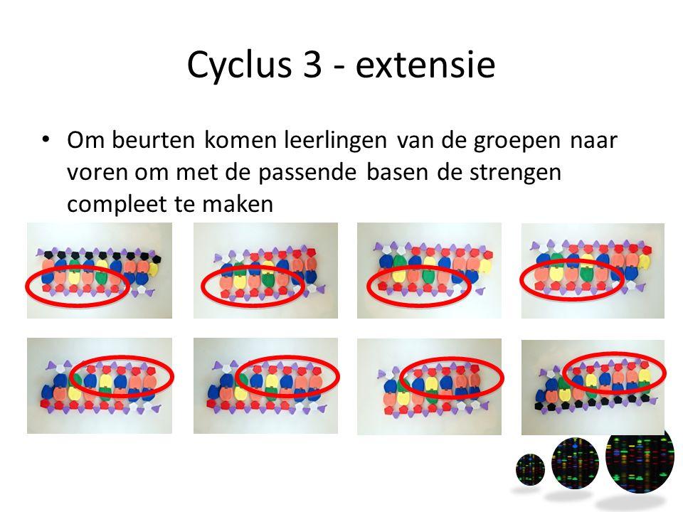 Cyclus 3 - extensie Om beurten komen leerlingen van de groepen naar voren om met de passende basen de strengen compleet te maken