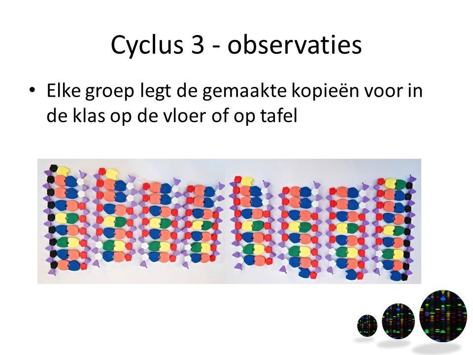 Cyclus 3 - observaties Elke groep legt de gemaakte kopieën voor in de klas op de vloer of op tafel