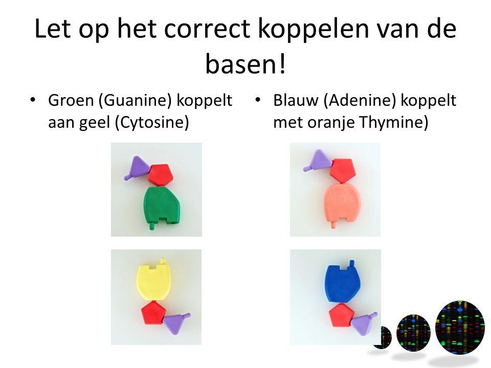 Let op het correct koppelen van de basen! Groen (Guanine) koppelt aan geel (Cytosine) Blauw (Adenine) koppelt met oranje Thymine)