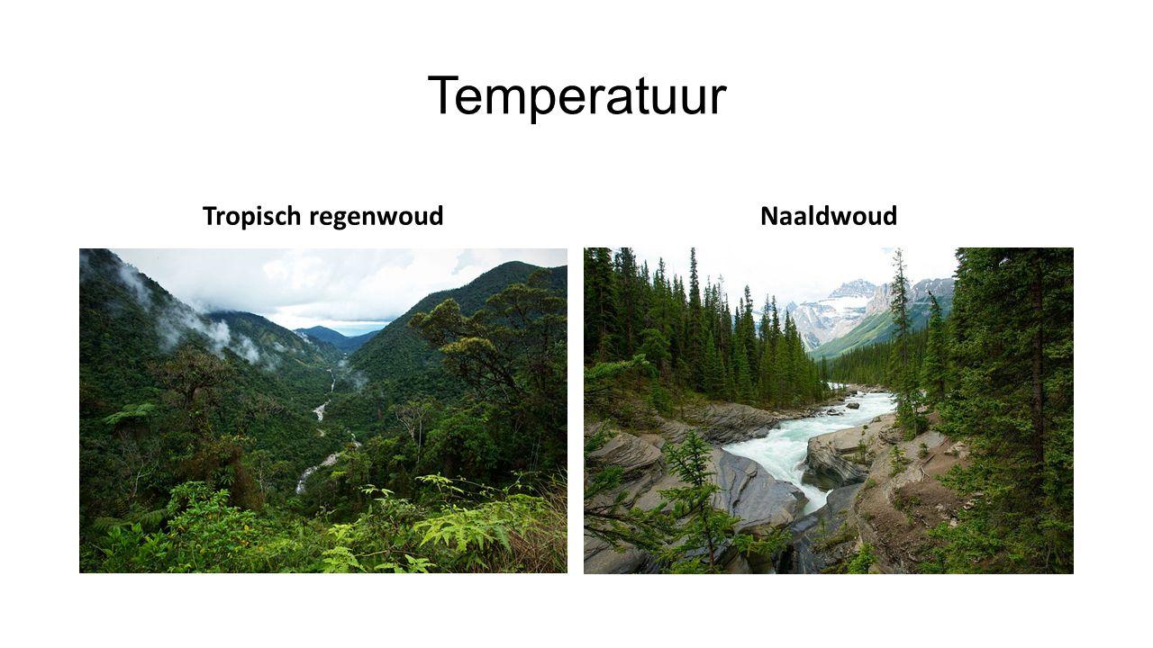 Temperatuur Tropisch regenwoudNaaldwoud