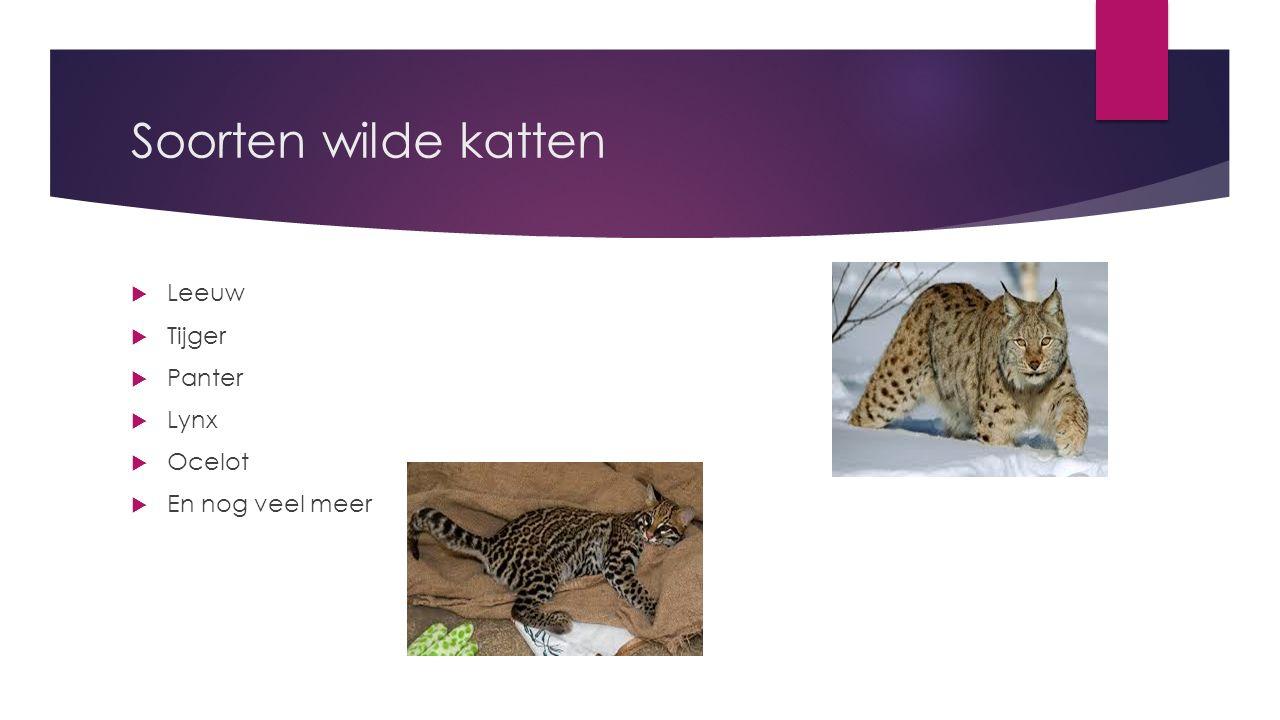 Soorten wilde katten  Leeuw  Tijger  Panter  Lynx  Ocelot  En nog veel meer